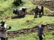 Haïti - Agriculture : Les récoltes d'automne sont peu performantes