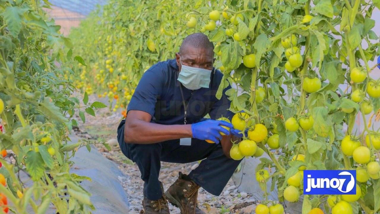 Ferme agricole La Porte, un projet de relance de la production agricole